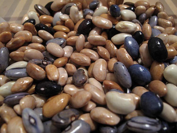 Razmjena sjemena