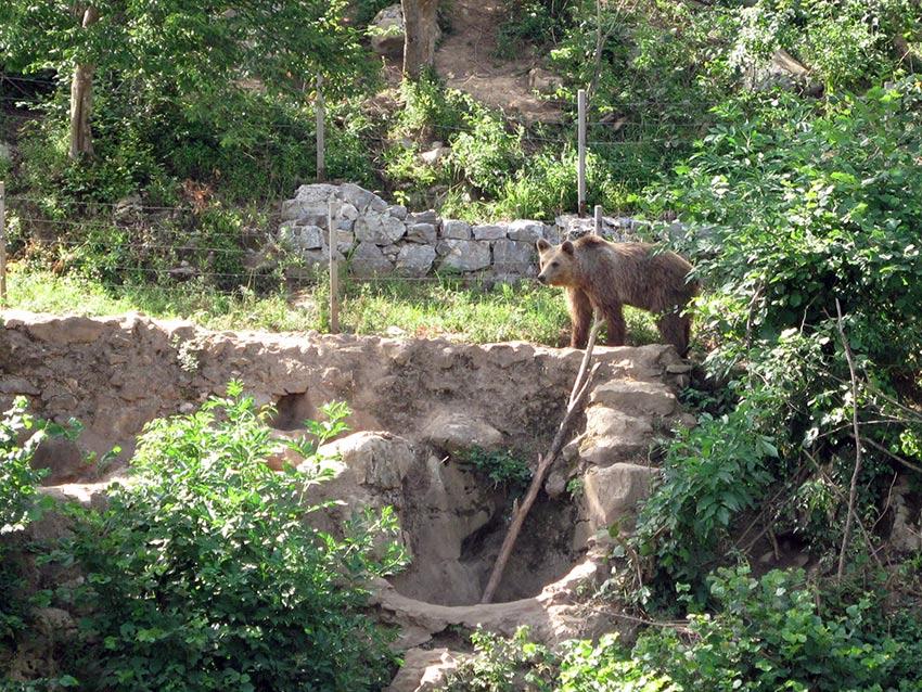 Kuterevo – utočište za medvjede