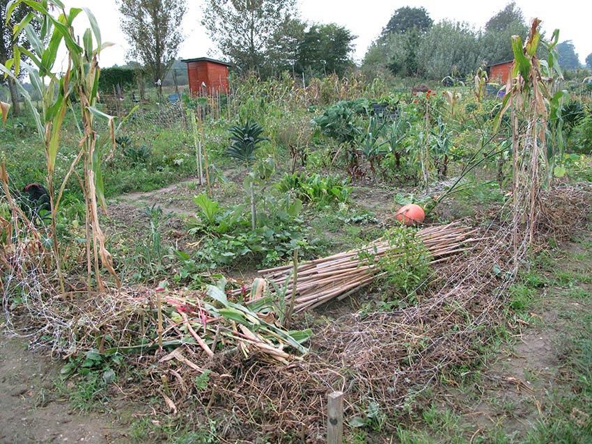 Vrt u listopadu