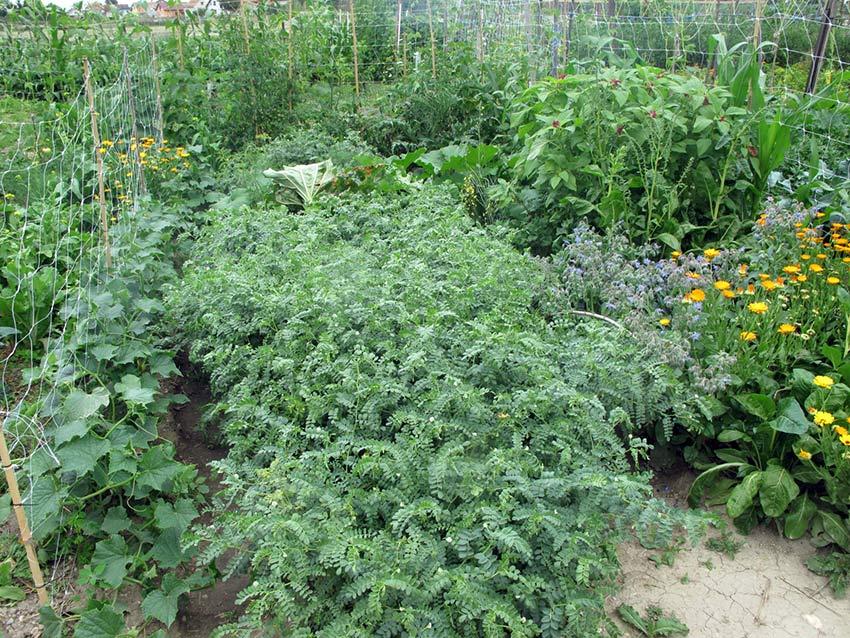 Vrt u srpnju